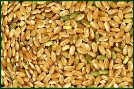 South America Rice