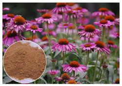 Baramasi Leaves Powder (HRP0178)