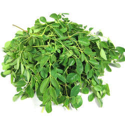 Moringa Leaves Powder (HRP0021)