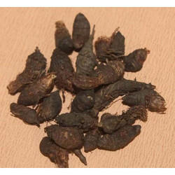 Nagarmotha Powder (HRP0161)