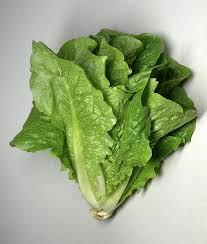 Fresh Green Romaine Lettuce