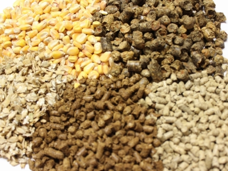 Animal Feed Products
