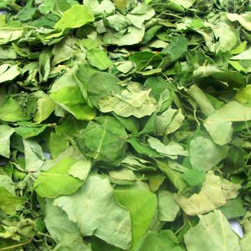 Moringa Dried Leaves