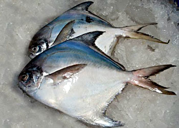 Sea Pomfret Fish