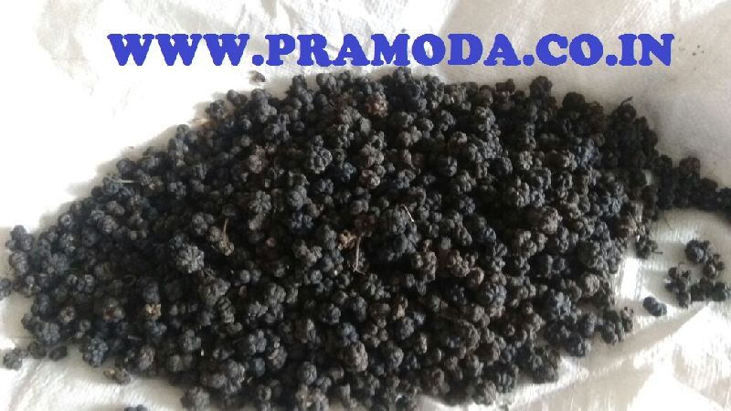 DRIED NONI FRUITS