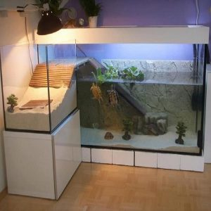 Aquarium Tutorial fish tank