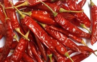 334 TEJA Red Chilli