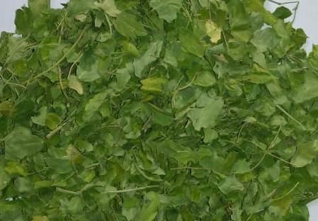 Dried Moringa Leaves (Moringa oleifera)