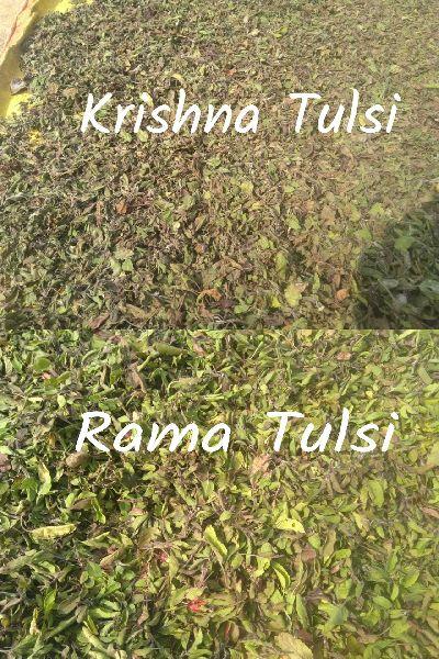 Dried Tulsi Leaves (Ocimum Sanctum)