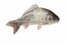 fish holding tanks, Aquaculture Tanks