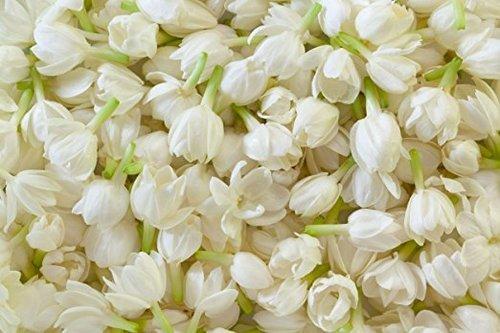 Fresh Jasmine Buds