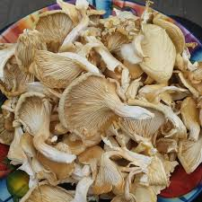 Dried White Oyster Mushrooms