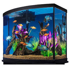 Aquarium Buy Aquarium For Best Price At Inr 25 K Piece S Approx