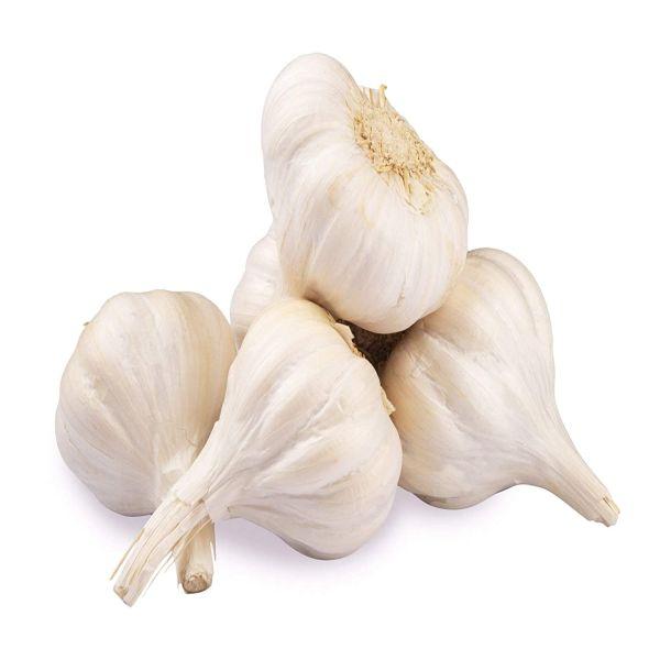Fresh Garlic (07032000)