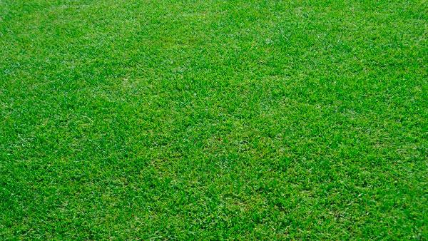 Mexican Grass (19)