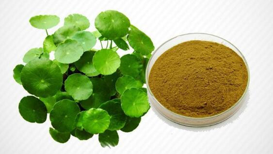 Centella Extract by MRP Nutraceuticals, centella extract,Centella Asiatica  Extract | ID - 5355839