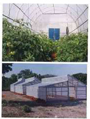 UV Stabilized Films For Greenhouse