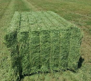 Alfalfa Hay by Saico Healthcare, alfalfa hay, INR 50INR 140 / Kilogram   ID  - 5582756