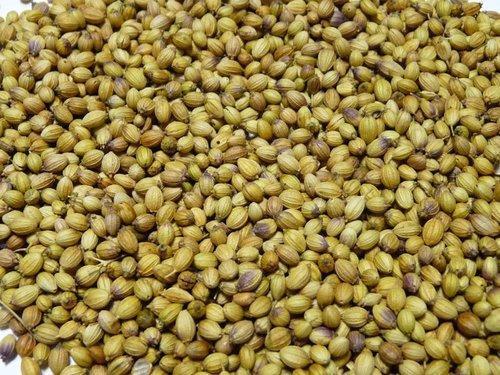 Ethiopia Coriander Seeds