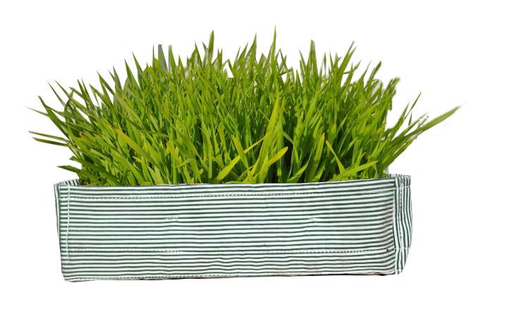 Green Striped Wheat Grass Tray