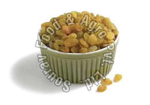 Black Raisins Golden Raisins& Greenish Raisins