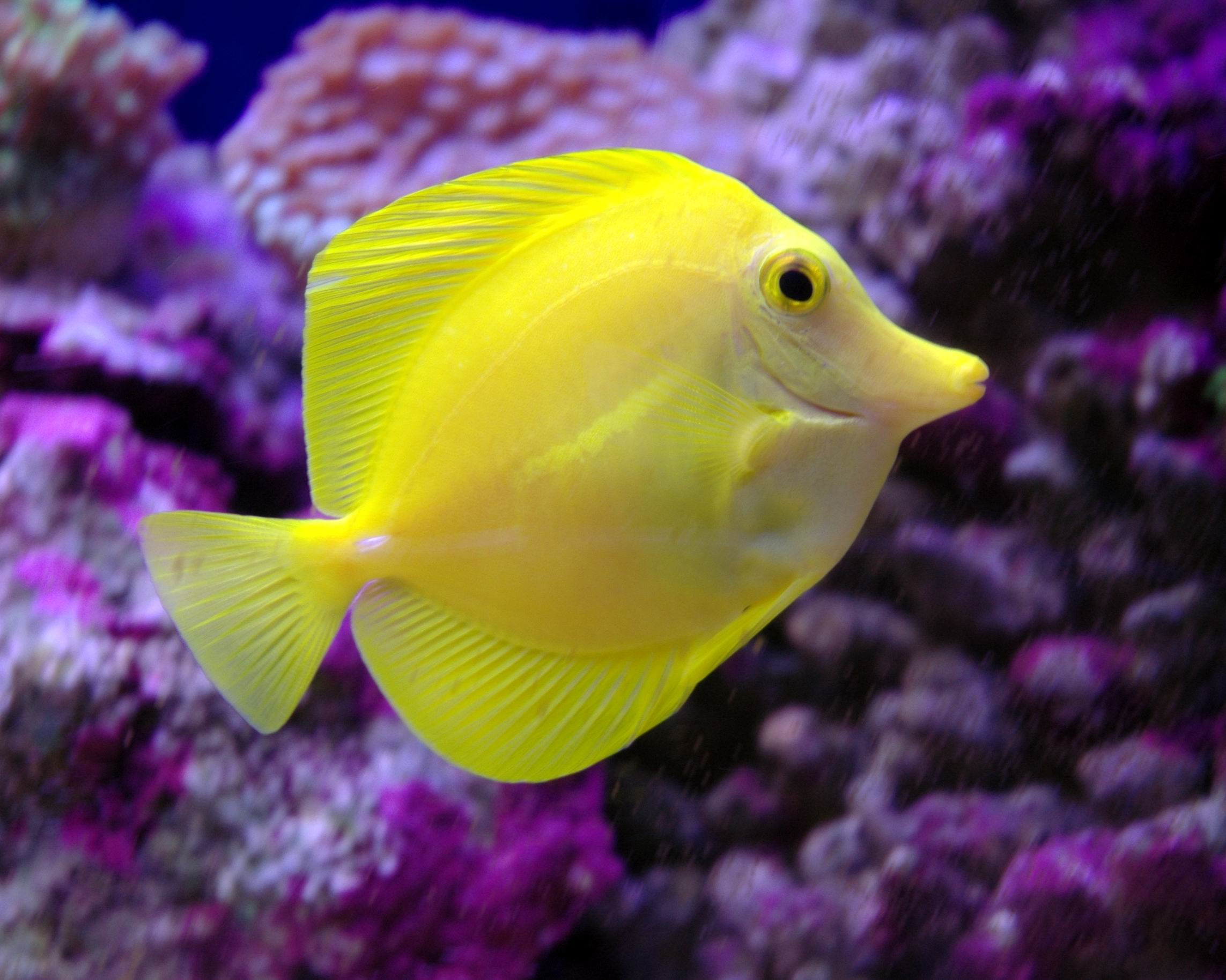 Aquarium fishes manufacturer in tamil nadu india by for Wholesale tropical fish