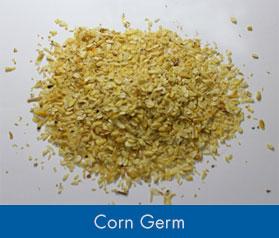 Maize Germ