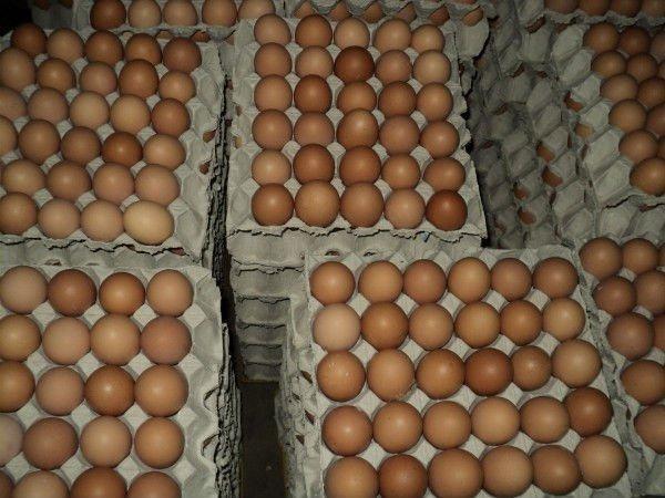 Fresh Table Egg
