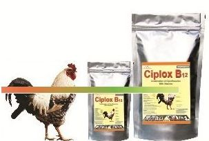 Ciplox B12 Poultry Feed Supplement