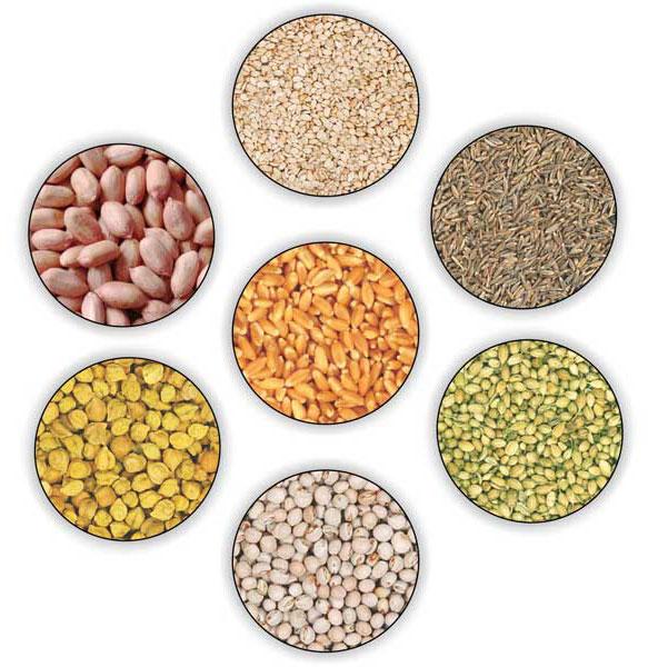 Research & Hybrid Seeds