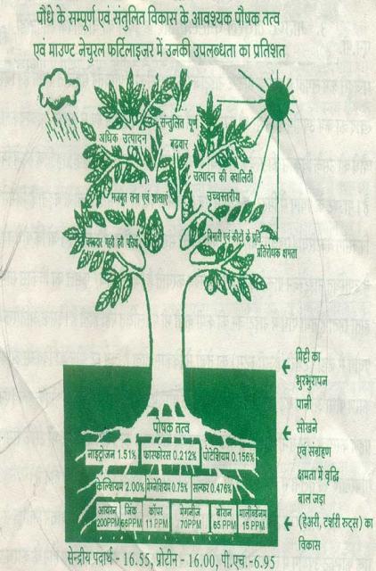 Mount Natural Fertilizer