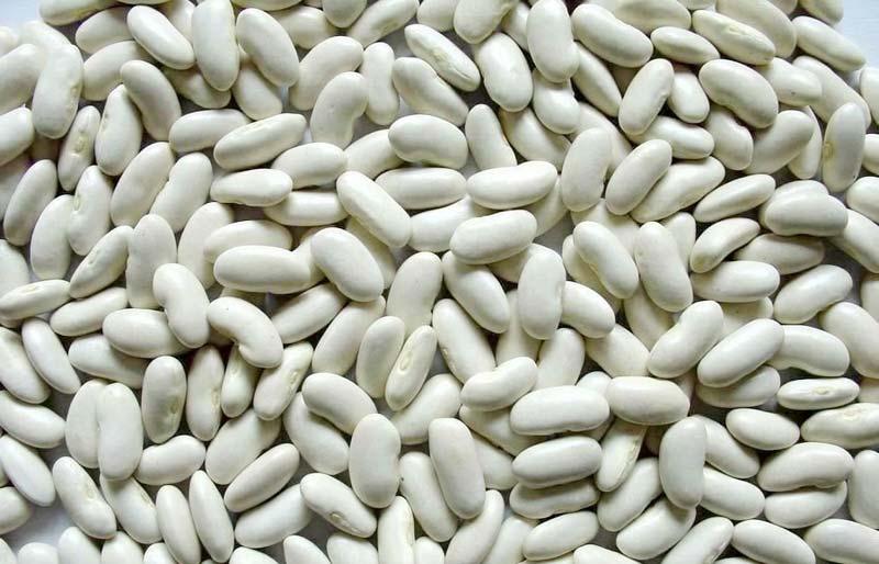 WHITE KIDNEY BEAN (3693)