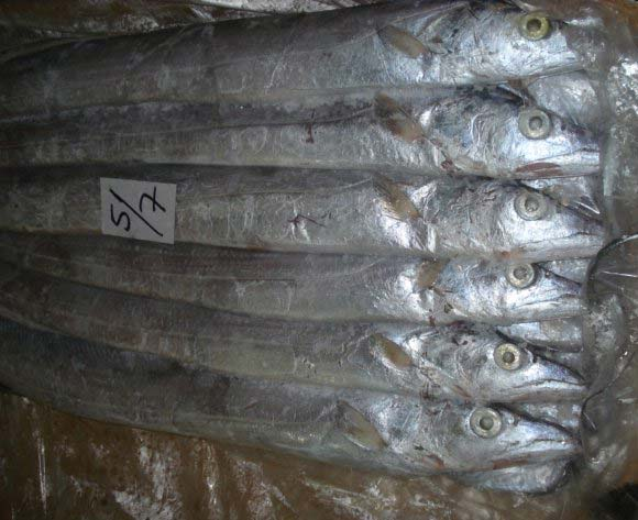 Frozen Ribbon Fish Manufacturer In Colorado United States