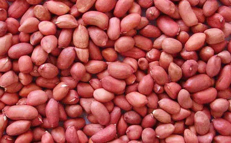 Red skin peanuts kernel