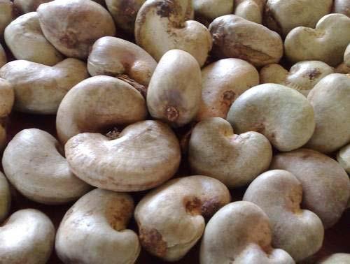 Tanzania Raw Cashew Nuts  Cashew Nuts in Shell. Tanzania Raw Cashew N
