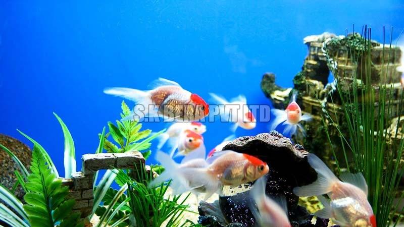 Aquarium Fish Manufacturer & Wholesale Suppliers from Contai
