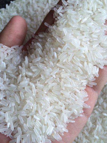 Arroz Branco de Grão Longo Compre ARROZ BRANCO DE GRÃO LONGO em Samut Sakhon, Tailândia