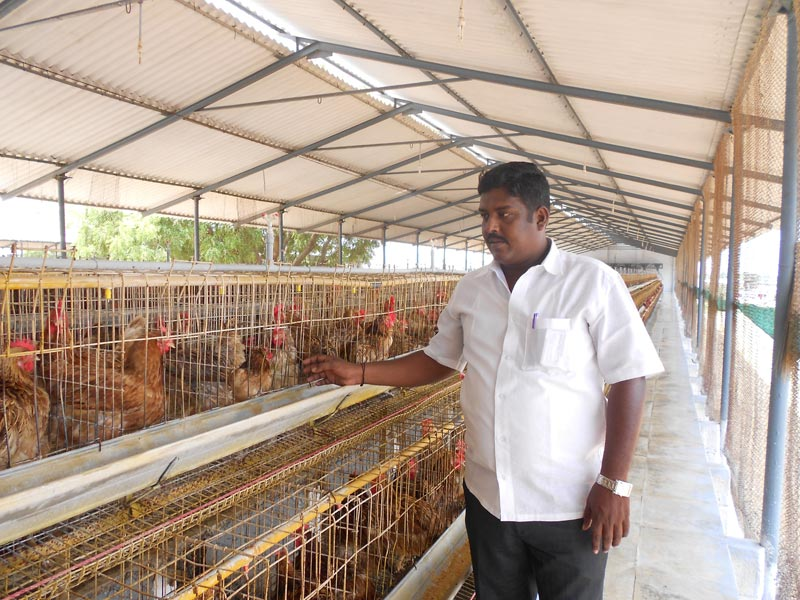 Sasso Hatching Eggs Wholesale Suppliers in Tamil Nadu India