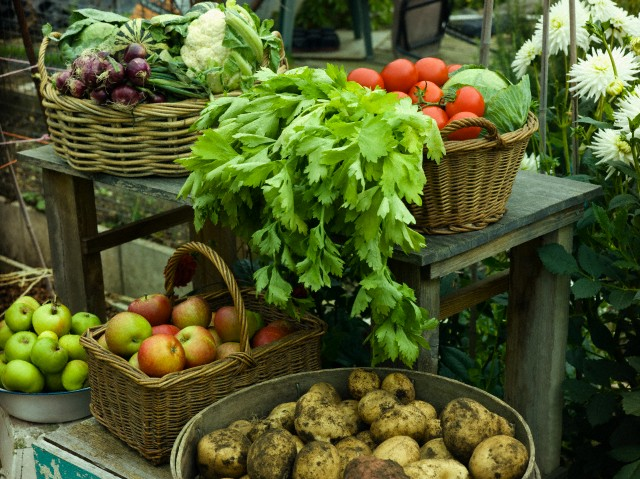 Agro Based Commodities Manufacturer in Delhi Delhi India by