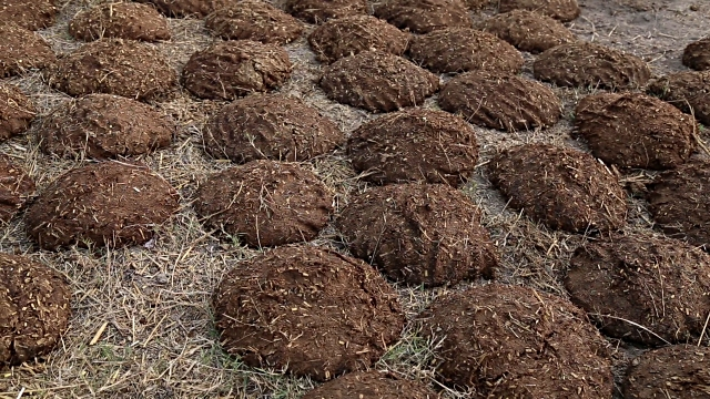 how to sell cow dung cakes online