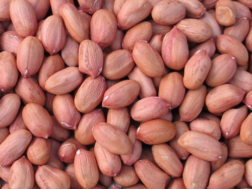 groundnuts nutrition and groundnut plant