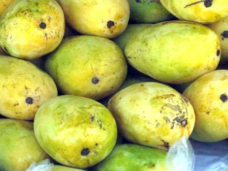 Langda Malda Mangoes