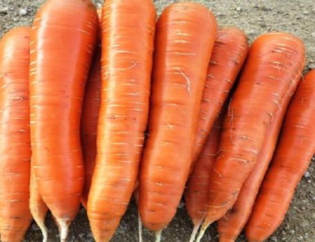 Fresh Carrots (Fresh Tomatoes)