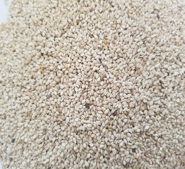White Sesame Seed (R-3322)