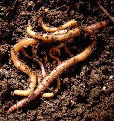 Bio Organic Fertilizer (Manure233)