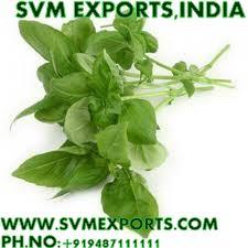Ocimum Sanctum Dry Leaves (SVM_E2)
