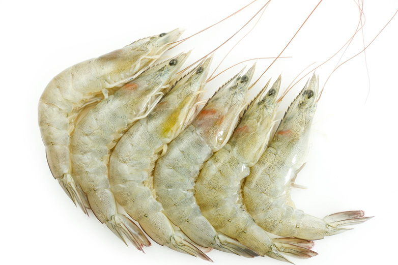 White Prawn Manufacturer & Exporters from Kochi, India   ID - 3794789