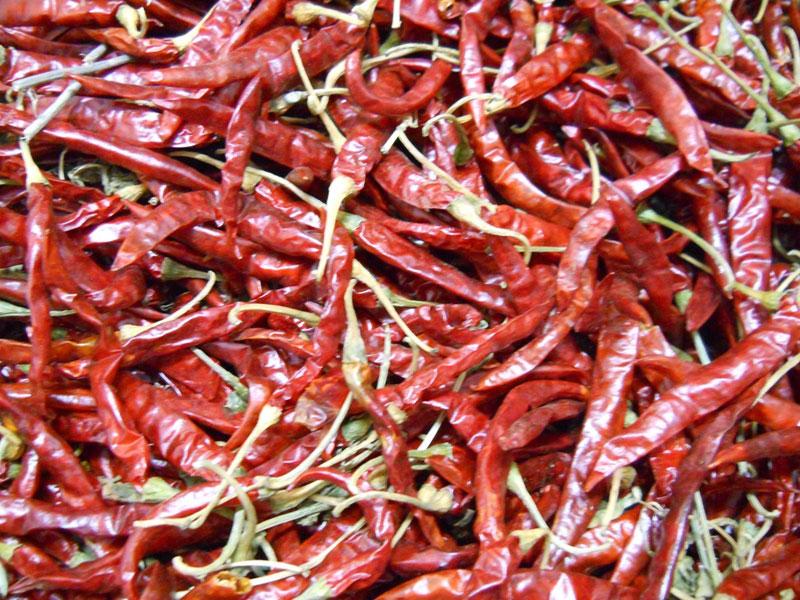 Chilli Teja Manufacturer & Exporters from Guntur, India | ID - 484594