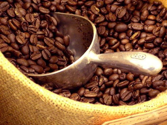 Coffe Beans (Doozi P05)