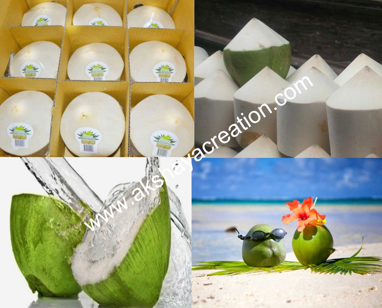Tender Coconut Manufacturer & Exporters from Thiruchengode